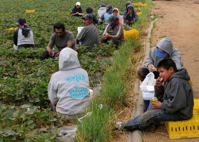рабочие мексики